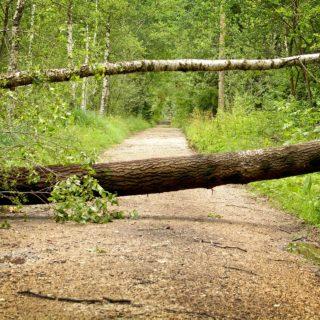 Sähköt vienyt kaatunut puukaan ei estä kompostoivaa sisävessaa toimimasta